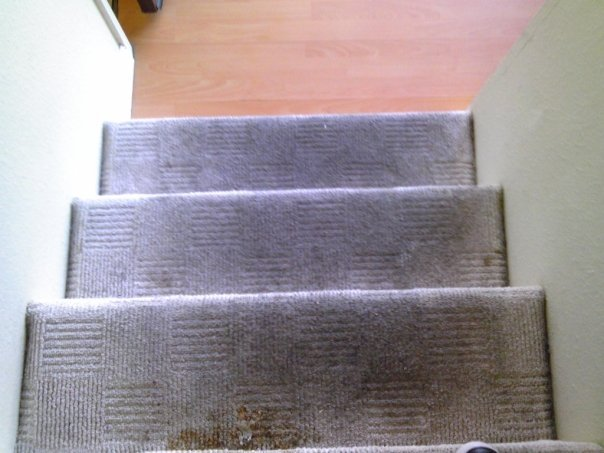 Keeping Your Carpets Smelling Fresh in Corona Odor and Spot Elimination