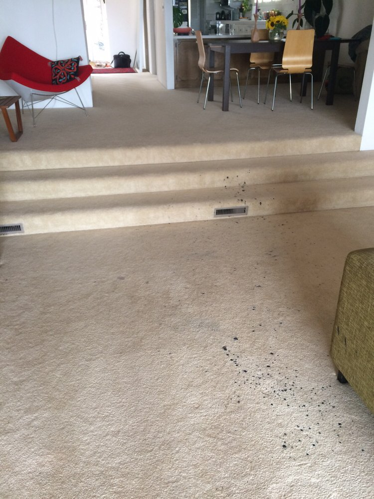 Techniques, Methods and Benefits of the Best Carpet Cleaning Corona