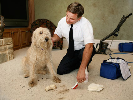 Thorough Carpet Cleaning and Maintenance Is a Necessary Task in Corona