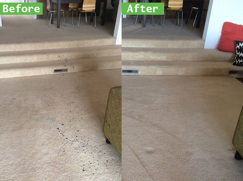 Greatest Carpet Cleaning Deals and Prices Corona Area Rug Cleaning